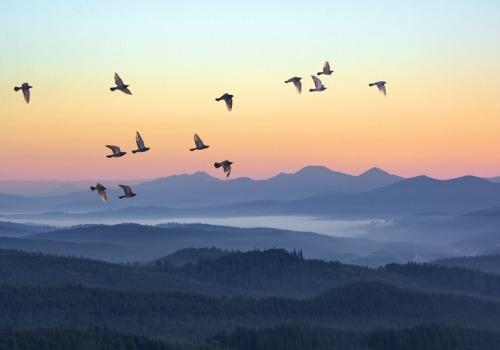 birds flying across misty mountains